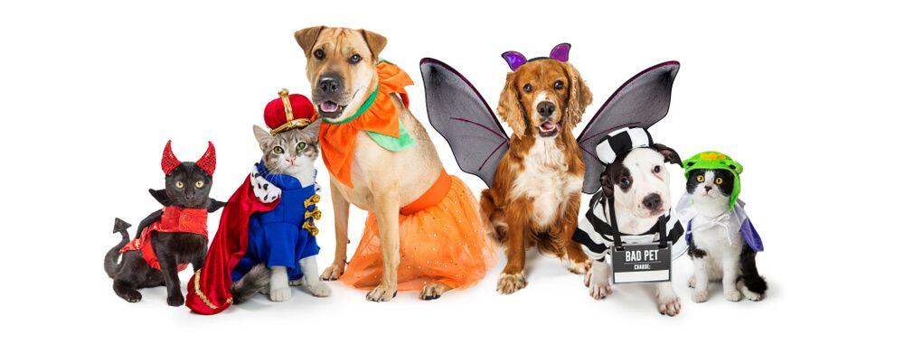 Disfraces para perros gatos mascotas halloween navidad carnavales