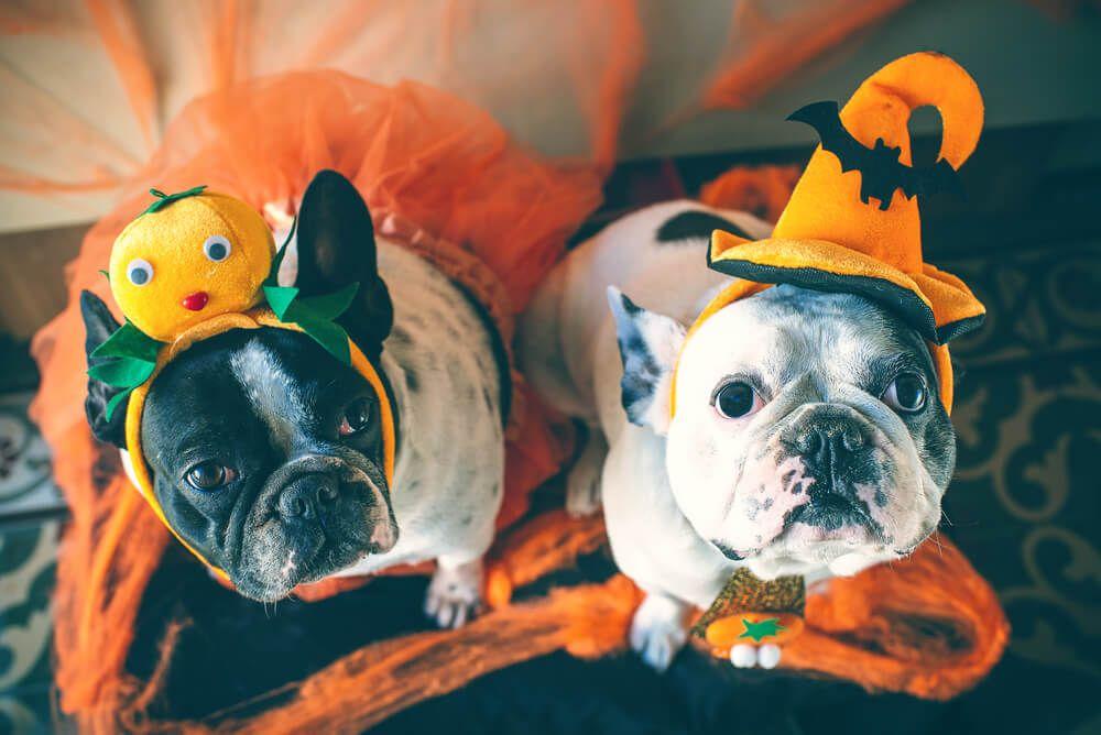 Disfraces para perros mascotas halloween