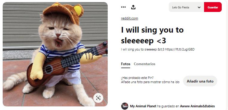 disfraces para perros y gatos artista