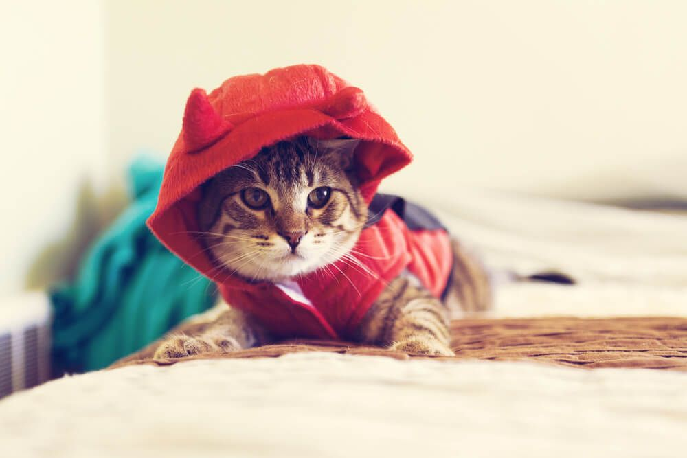 fiesta día del gato