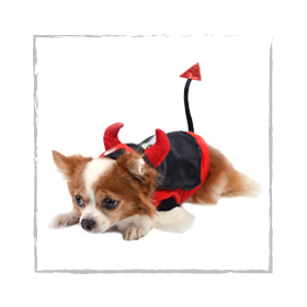 Disfraces Mascotas Perros